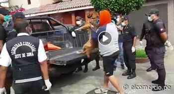 San Miguel: municipio confirma que dejará que vecinos saquen a sus perros para sus necesidades - El Comercio Perú