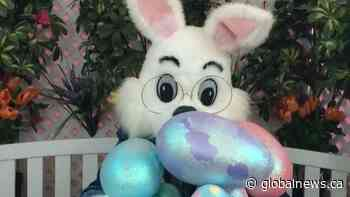 Slave Lake deems Easter Bunny an essential worker during COVID-19 pandemic - Global News