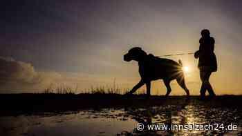 Ampfing: Polizei Mühldorf warnt Hundebesitzer - Verdächtige Lebensmittel   Ampfing - innsalzach24.de