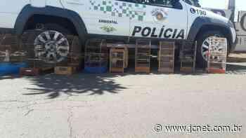 Polícia Ambiental flagra tráfico e aves silvestres em cativeiro em Pederneiras - JCNET - Jornal da Cidade de Bauru