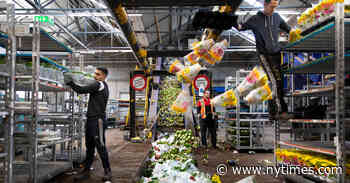 Where Have 140 Million Dutch Tulips Gone? Crushed by the Coronavirus