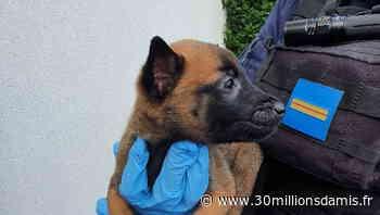 Sauvetage de 42 chiens et chats à Tremblay-en-France (93) - Fondation 30 millions d'amis