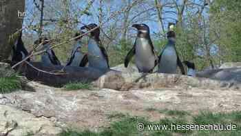 Video: Tierparks in Hessen: Opelzoo in Kronberg - hessenschau.de