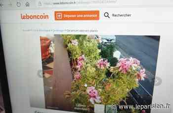 Les fleurs volées à Montataire étaient revendues sur Leboncoin - Le Parisien