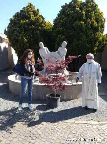 Bareggio, un acero al cimitero in memoria della vittime da Covid - Ticino Notizie