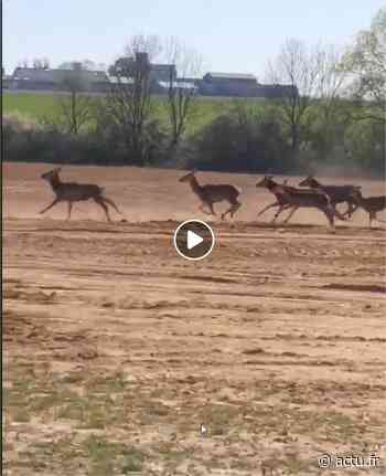 Yvelines. Chevreuse. Cédric filme les biches sur la route de la vallée de Chevreuse et ça fait le buzz - actu.fr