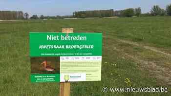Natuurpunt Scheldeland roept op om broedende vogels niet te storen in Kalkense Meersen