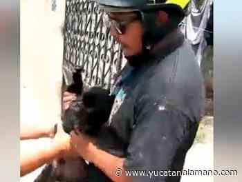 """""""Secuestra"""" a un perro en Oxkutzcab - Yucatán a la mano"""