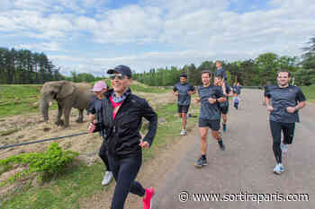 Thoiry Wild Race 2020 : courir au milieu des animaux ! - sortiraparis