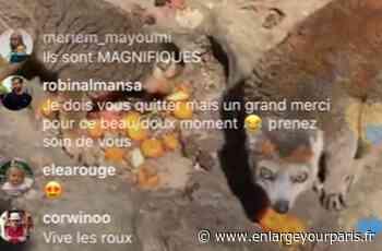 Rencontre avec les lémuriens, goûter des tigres… le Zoo de Thoiry se vit en Live sur Instagram - enlargeyourparis.fr