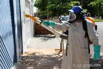 Tanabi registra primeira morte por dengue e tem mais 200 casos confirmados da doença - G1