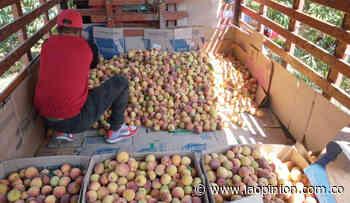 Cácota compra duraznos a sus campesinos para darlos a afectados por COVID-19 - La Opinión Cúcuta