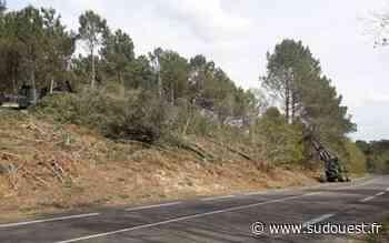 Landes : 800 arbres dangereux abattus pour sécuriser une route de Biscarrosse - Sud Ouest