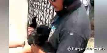 Dueña de pug, enfrenta al secuestrador de su mascota en Oxkutzcab - Turquesa News