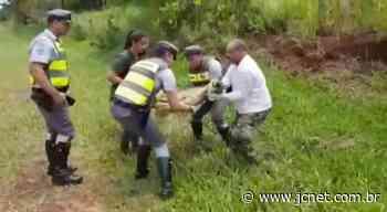 Onça-parda é resgatada pela Polícia Rodoviária em Agudos - JCNET - Jornal da Cidade de Bauru
