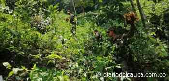 En Otanche, Boyacá, 15.597 plantas de coca fueron erradicadas - Diario del Cauca