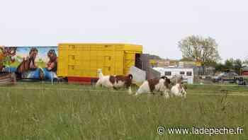 Plaisance-du-Touch. Le cirque Muller bloqué dans un champ depuis un mois - LaDepeche.fr
