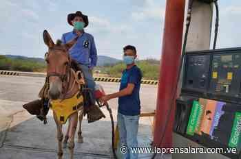 A caballo: así se movilizan productores agropecuarios de Carora - La Prensa de Lara