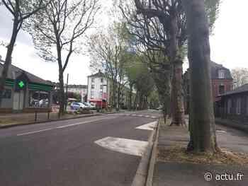 Les Andelys : un platane abattu mercredi, l'avenue de la République partiellement coupée - Normandie Actu