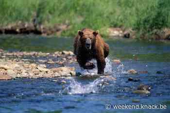 Vijftien bedreigde diersoorten die aan een comeback bezig zijn