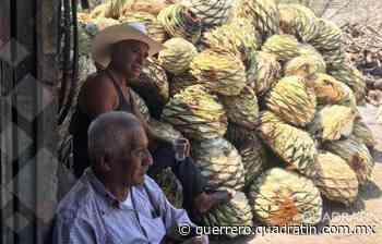 Coronavirus no interrumpe la producción de mezcal en Tixtla - Quadratín Michoacán