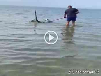 Orbetello, si tuffa e disincaglia uno squalo: ecco il salvataggio - Corriere della Sera