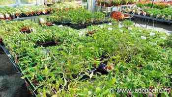 Gramat. L'approvisionnement des plants assuré dans les jardineries - ladepeche.fr