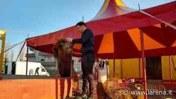 Appello dei circensi bloccati a Bussolengo «Aiutateci a nutrire gli animali» - L'Arena
