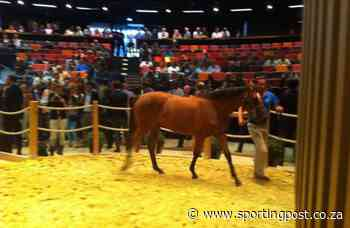 Arqana & Goffs Join Forces - Sporting Post