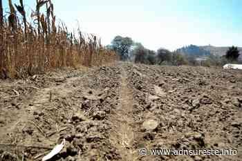 Pequeños productores y comerciantes en Tlaxiaco demandan apoyos (10:00 H) - ADNl sureste