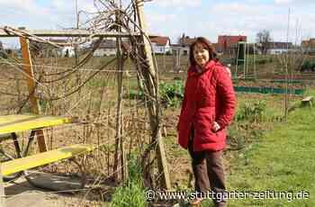 Interkultureller Garten in Filderstadt-Sielmingen - Im Grünen entstehen Freundschaften - Stuttgarter Zeitung