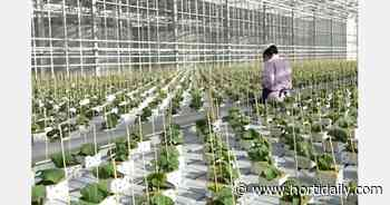 Eight ha greenhouse complex launched in Cherepovets - hortidaily.com