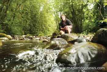 Kanaka Creek: Waterfalls, fish, sandstone and fun at this regional park - Maple Ridge News