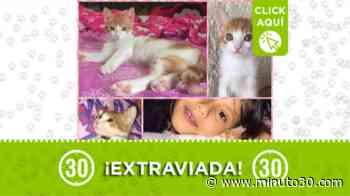 'Perla' se perdió en el barrio Guayabal, ¿la ha visto? - Minuto30.com
