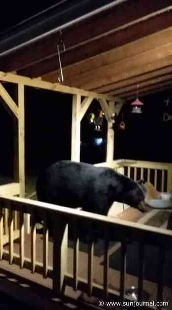Bear visits Chesterville home - Lewiston Sun Journal