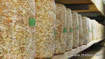 Agro Process construit la fromagerie Dischamp à Saint-Flour - Bref Eco