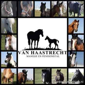 """Tegenslag na tegenslag voor Stal Haastrecht: """"We dachten: zo, dit hebben we overleefd"""" - dehoefslag.nl"""