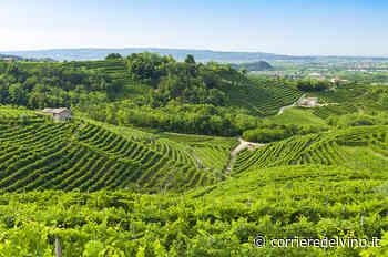 Il Rinascimento Verde di Fontanafredda - Corriere del Vino