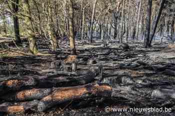 Natuurbrand Oud-Turnhout: 30 hectare in de as gelegd, grotere ramp vermeden