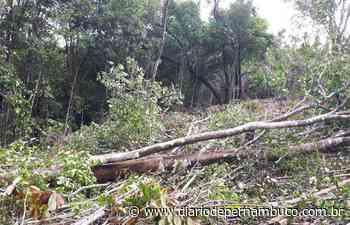 Infratores resistem à fiscalização de desmatamento em Abreu e Lima - Diário de Pernambuco