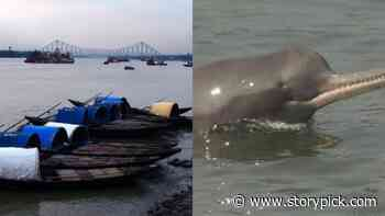 Dolphins Make A Comeback In Kolkata After 30 Yrs As Hoogly River Quality Improves - Storypick