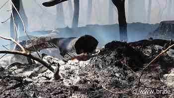Waldbrand bei Feucht - BR24
