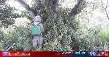 Chofer muere por ataque de abejas en Panuco - Hoy Tamaulipas