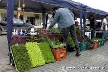 Coronavírus: agricultores criam delivery de frutas e verduras em Araquari | NSC Total - NSC Total