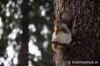 In the Tver region the mother of the children had an accident due to squirrels on the road - The Times Hub