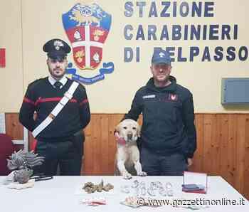 Belpasso, il cane Ivan fiuta la marijuana: un arrestato - Gazzettinonline