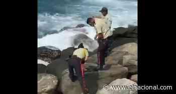 [VIDEO] Policías pescan en playas de Catia La Mar durante su jornada de trabajo - El Nacional