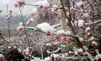 Gelo e neve sulle gemme in fioritura: danni in Val Menaggio e Alto Lago – Espansione TV - Espansione TV