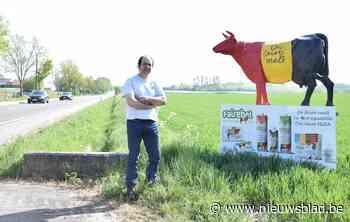 """Bekende koe aan gewestweg moet weg: """"Visuele vervuiling"""" - Het Nieuwsblad"""