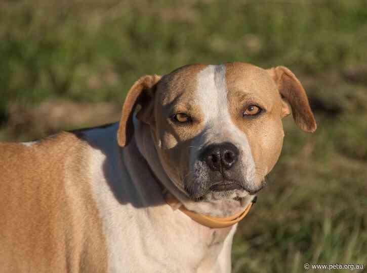 Shocking Ruling in NSW Dog Stabbing Case
